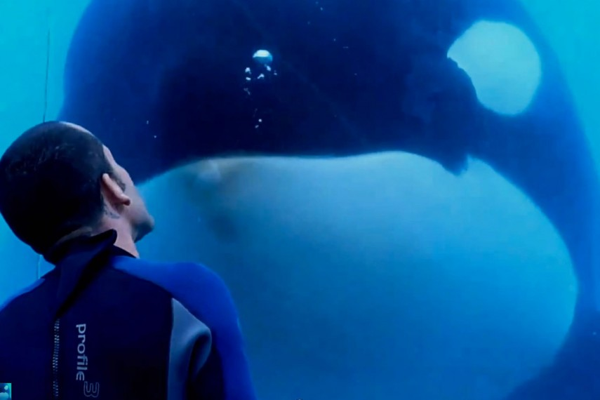 /db_data/movies/blackfish/scen/l/04-blackfish.jpg