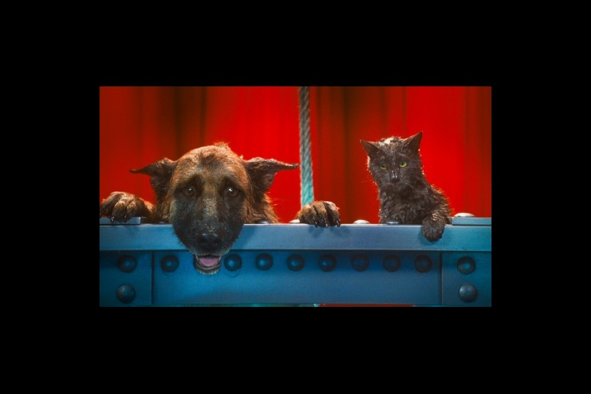 /db_data/movies/catsanddogs2/scen/l/1-Picture25-a34.jpg