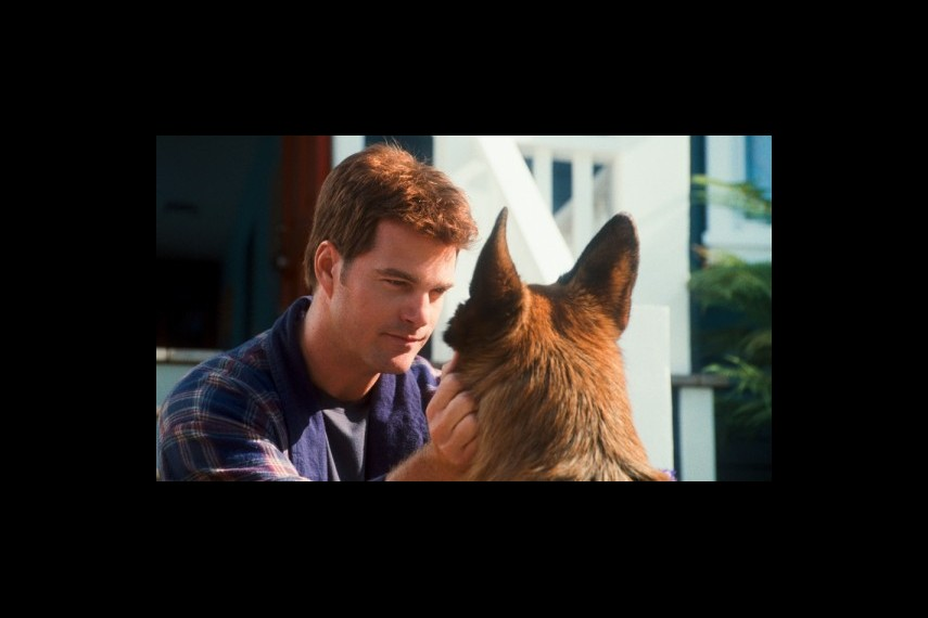 /db_data/movies/catsanddogs2/scen/l/1-Picture26-c43.jpg