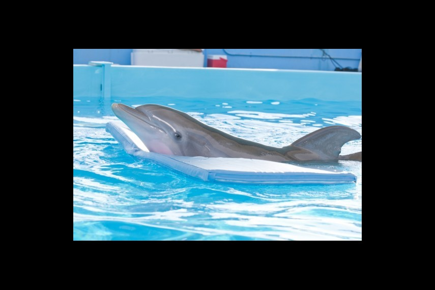 /db_data/movies/dolphintale/scen/l/1-Picture 5-795.jpg