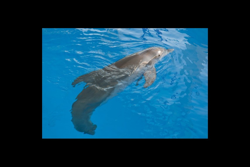 /db_data/movies/dolphintale/scen/l/1-Picture 6-4ff.jpg