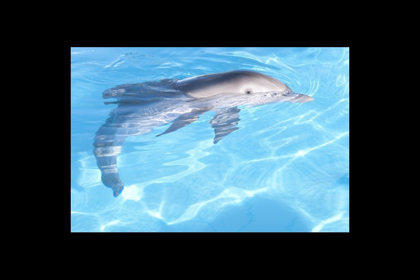 /db_data/movies/dolphintale/scen/l/1-Picture19-17a.jpg