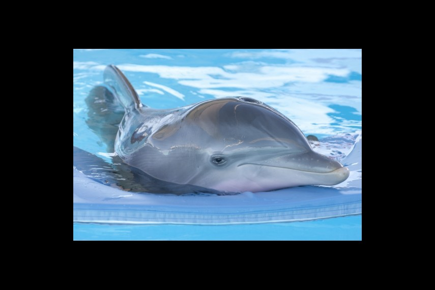 /db_data/movies/dolphintale/scen/l/1-Picture20-fd1.jpg