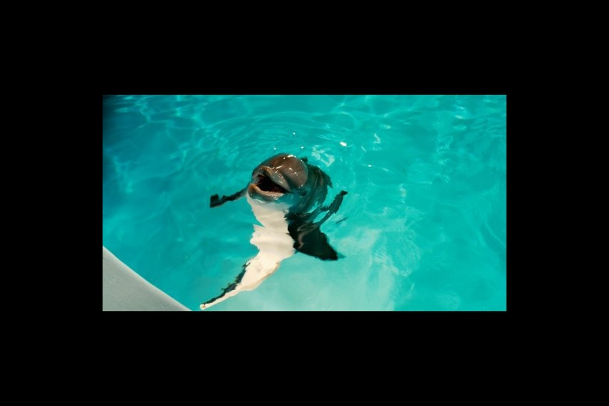 /db_data/movies/dolphintale/scen/l/1-Picture34-9fc.jpg