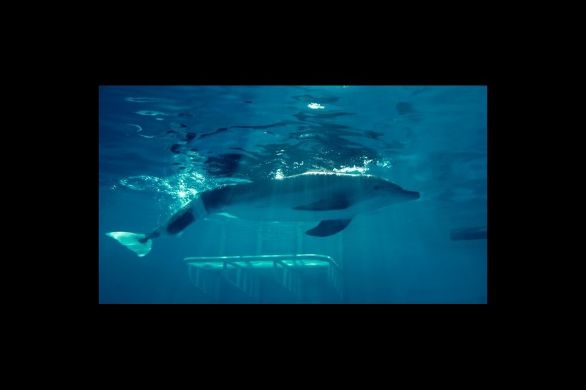 /db_data/movies/dolphintale/scen/l/1-Picture36-b0d.jpg