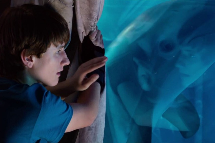 /db_data/movies/dolphintale2/scen/l/nathan-gamble-in-dolphin-tale-2-movie-6.jpg