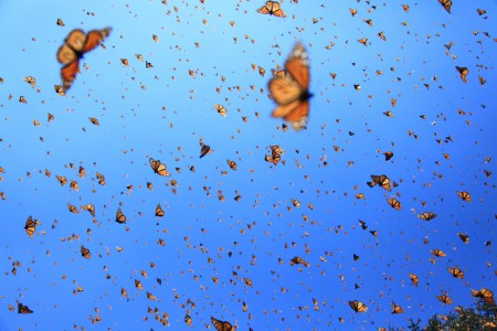 Flight-of-the-Butterflies-3D.jpg