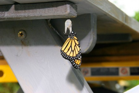 Still - Emerging Monarch - FOB - SK Films.jpg