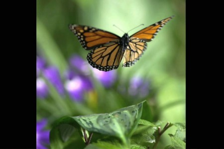Still - Monarch in Flight - FOB - SK Films.jpg