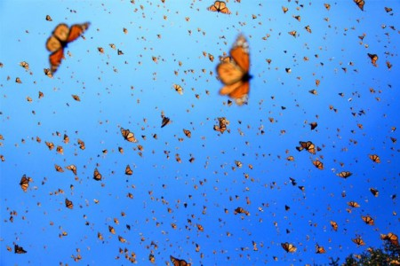 Still - Monarchs in the Sky - FOB - SK Films.jpg