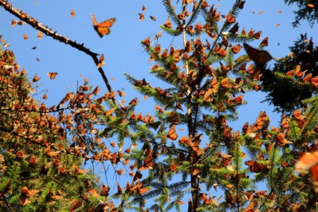Still - Monarchs in the Sky2 - FOB - SK Films.jpg