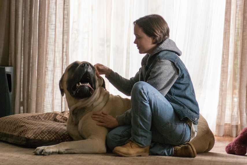 /db_data/movies/freeheld/scen/l/05.jpg