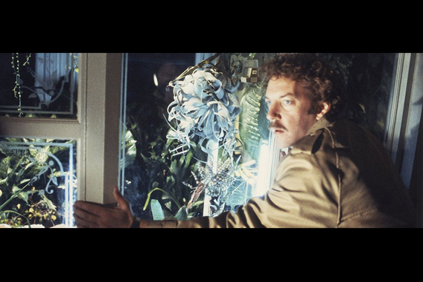 /db_data/movies/invasionofthebodysnatchers/scen/l/2_INVASION_OF_THE_BODY_SNATCHE.jpg