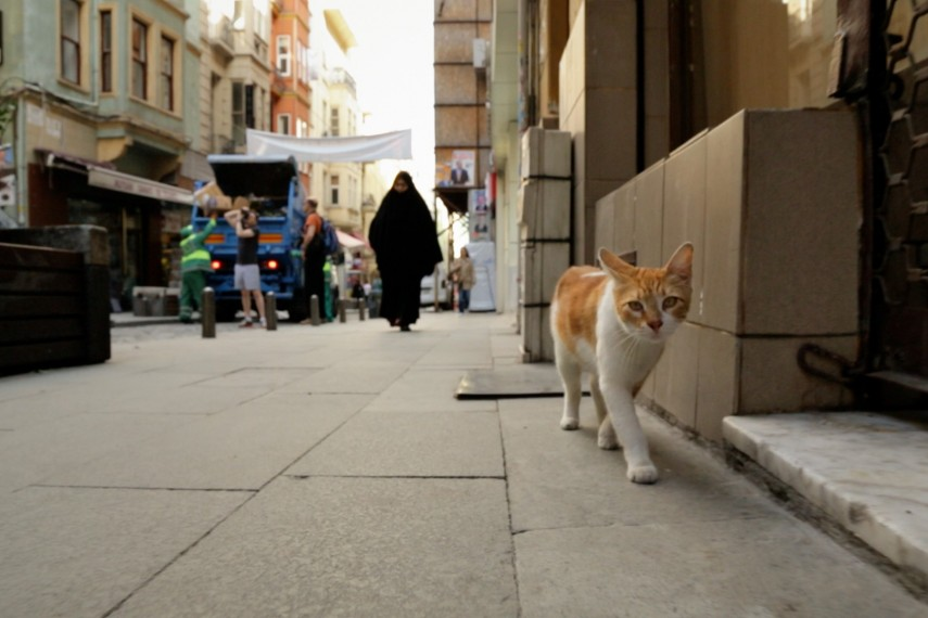 /db_data/movies/kedi/scen/l/06-kedi.jpg