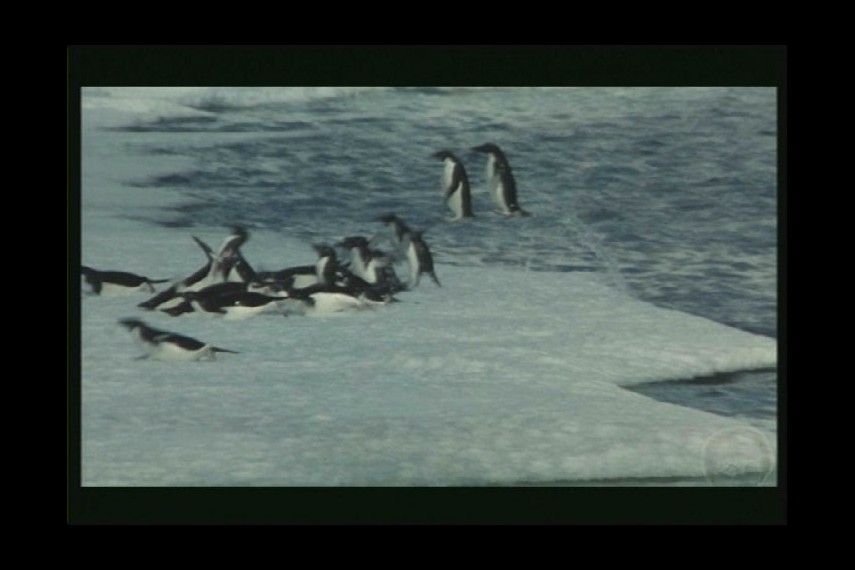 /db_data/movies/kongressderpinguine/scen/l/PDVD_003.jpg