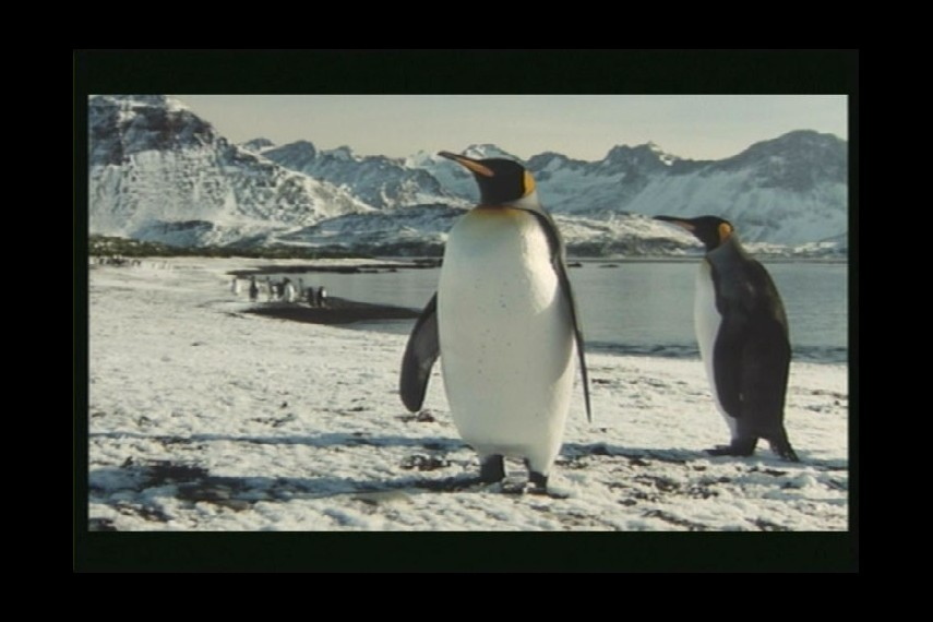 /db_data/movies/kongressderpinguine/scen/l/PDVD_005.jpg