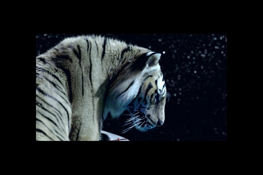 /db_data/movies/lifeofpi/scen/l/1-Picture30-184.jpg