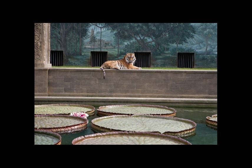 /db_data/movies/lifeofpi/scen/l/1-Picture32-39d.jpg