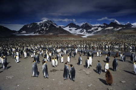 0012_Penguins_Colony-18f0a.jpg