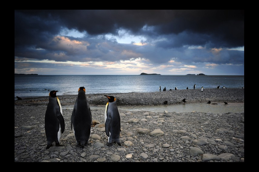 /db_data/movies/penguins/scen/l/0008_Penguins_Brothers-0357f.jpg