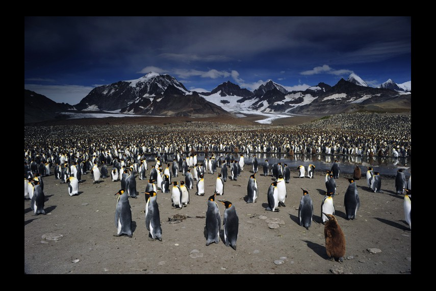 /db_data/movies/penguins/scen/l/0012_Penguins_Colony-18f0a.jpg