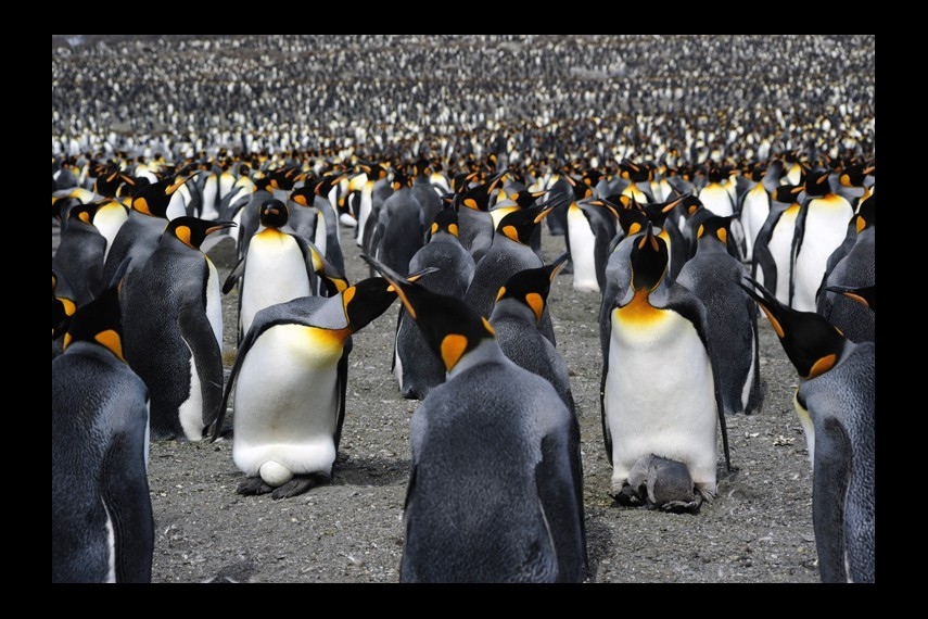 /db_data/movies/penguins/scen/l/0013_Penguins_Colony-15266.jpg
