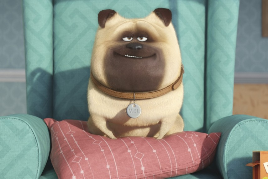 /db_data/movies/secretlifeofpets/scen/l/2426_TP_00081R_CROP.jpg