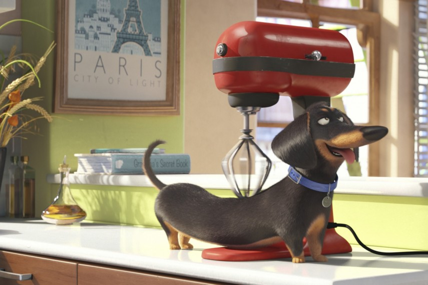 /db_data/movies/secretlifeofpets/scen/l/2426_TP_00086R_CROP.jpg