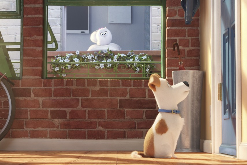 /db_data/movies/secretlifeofpets/scen/l/Max_voiced_by_Louis_C.K..jpg